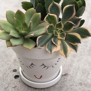 Succulent Pot Decor for Sale in Stockton, CA
