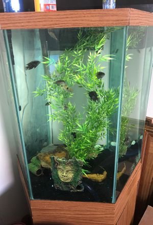60 gallon Aquarium for Sale in Maple Heights, OH