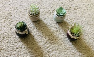 Brand New Faux Succulents & Ceramic pots for Sale in Farmington Hills, MI