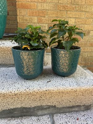 Clay flower pots for Sale in Bronxville, NY