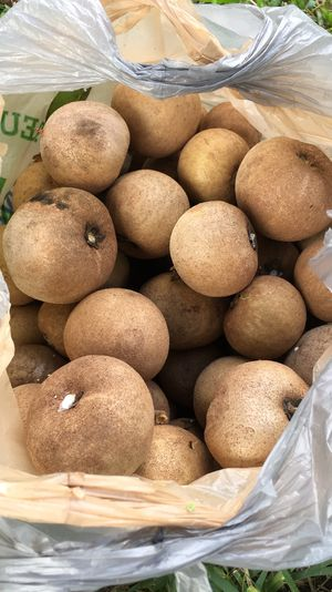 Organic Sapodilla for Sale in Margate, FL