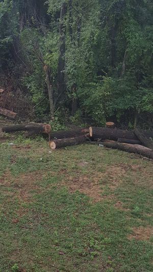 Free wood for Sale in Frederick, MD