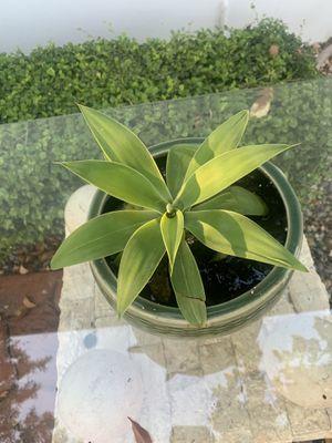 Agave Plant Ceramic Pot for Sale in Miami, FL