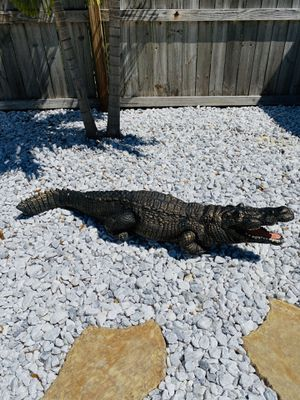ALLIGATOR (WinterHaven) for Sale in Winter Haven, FL