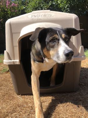 Dog House (Large) (Petmate) for Sale in Santa Ana, CA