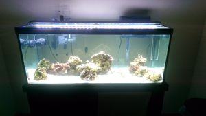 75 gallon fish tank with stand and lights for Sale in Victoria, TX