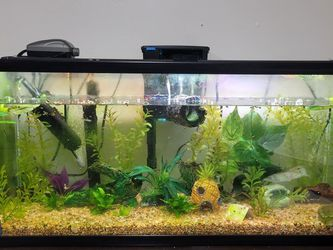 30 Gallon Aquarium With Everything You Need for Sale in El Cajon,  CA
