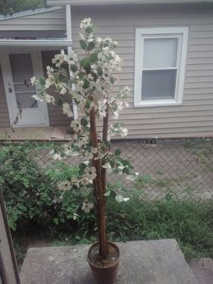 Fake plant for Sale in Lexington, KY