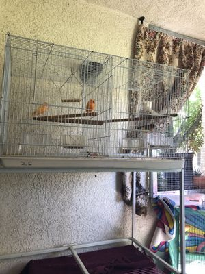 Bird cages/ Birds NOT included/ 20 dollars each cage for Sale in Perris, CA
