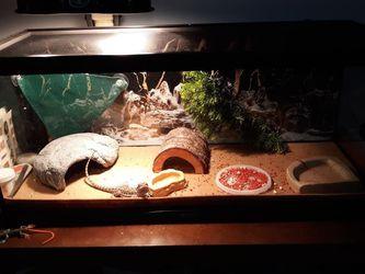 20 Gallon Reptile Tank. for Sale in Valhalla,  NY