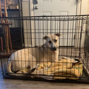 Large Dog Cage for Sale in Rancho Cucamonga, CA