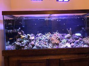 Aquarium Stuff for Sale in Philadelphia, PA