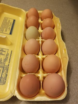Chicken eggs for Sale in Delaware, OH