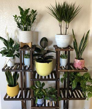 Indoor Plants • Individually Priced • Snake Plant, Pilea, Golden Pothos, Dumb Cane, Rubber plant, Dragon Tree, ZZ Plant, Succulent for Sale in Phoenix, AZ