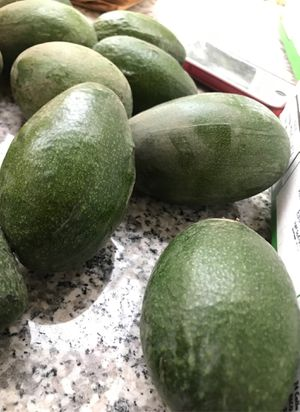 Avocados for Sale in Cutler, CA