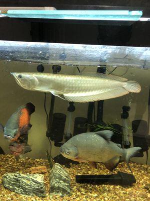135 gallon aquarium for Sale in Oklahoma City, OK