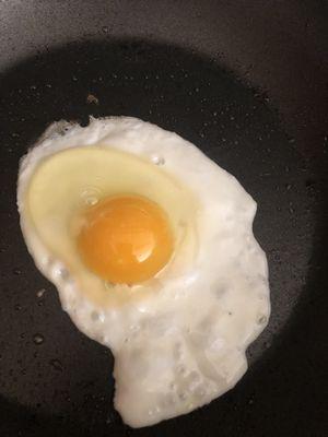 Backyard fresh eggs- organically raised for Sale in Colorado Springs, CO
