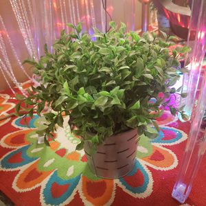 Plant faux for Sale in Fort Worth, TX