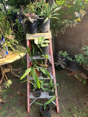 Great Bundle consisting of 8 Succulents for $50.00 for Sale in Whittier, CA