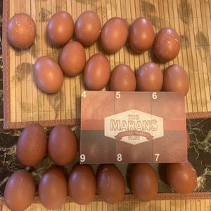 French Black Copper Marans Eggs for Sale in Los Angeles, CA