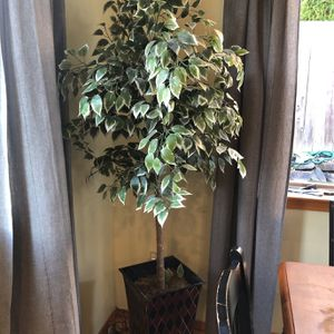 Fake Plant for Sale in Kenmore, WA