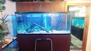 120 gallon fish tank for Sale in Columbus, OH