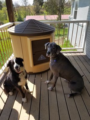 Extra Large Insulated Dog House for Sale in Knoxville, TN