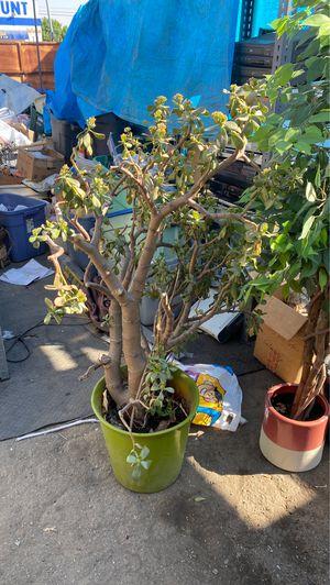 Flower pots for Sale in Gardena, CA