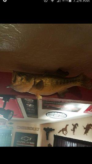 Bass fish for Sale in Mesa, AZ