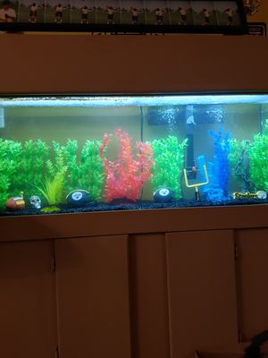 Fish Tank 75-gallon with Cabinet for Sale in Fort Lauderdale, FL