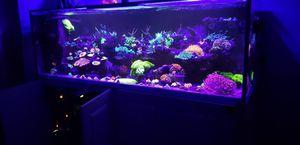 Saltwater aquarium fish tank for Sale in Los Angeles, CA