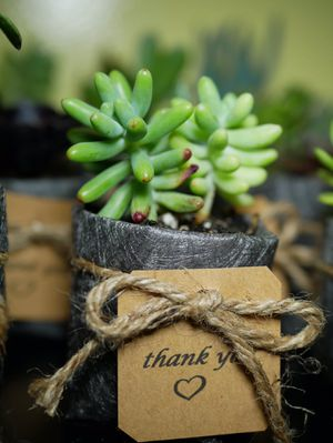 Party favor real succulent plant for Sale in San Lorenzo, CA