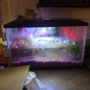 Fish Tank for Sale in Holiday, FL