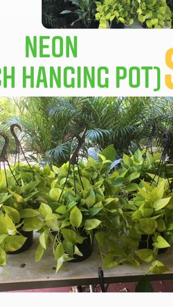 Home Plants- Neon Hanging $12 for Sale in Miami,  FL