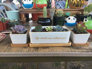 Succulent set for Sale in El Monte, CA