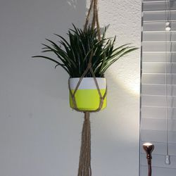 Hanging Plant for Sale in Delray Beach,  FL