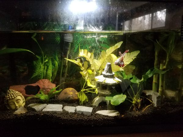 Top Fin 5.5 Gallon Fish Tank