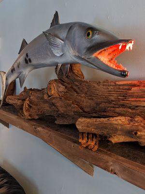 Huge Barracuda Taxidermy Mount for Sale in Smyrna, GA