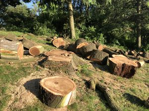 Free Elm Wood for Sale in Pittsburgh, PA