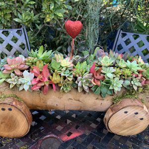 Succulent En Carreta for Sale in Bell, CA