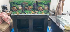 Big huge aquarium fish tank include everything for Sale in Raleigh, NC