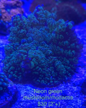Coral Frags Prices On Pictures. for Sale in Centreville, VA