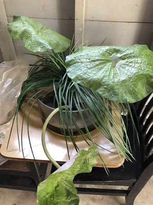 Fake Plant for Sale in Saint Paul, MN
