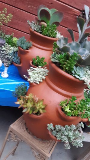 """18"""" clay pots with succulent plants $50 each for Sale in Whittier, CA"""