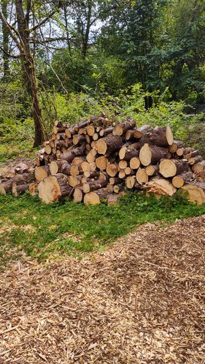 Firewood for Sale in Woodinville, WA
