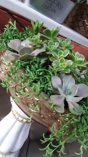 "18"" Long metal pot with succulent plants for Sale in Whittier, CA"