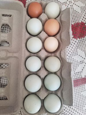 Eggs for Sale in Poway, CA