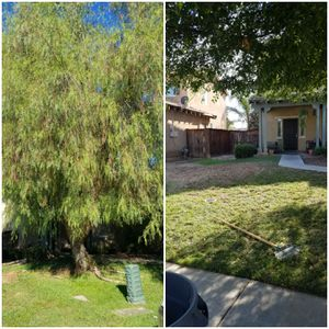 Tree removal for Sale in Fontana, CA