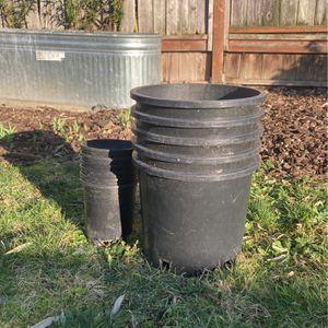 5 Gallon Planter for Sale in Portland, OR