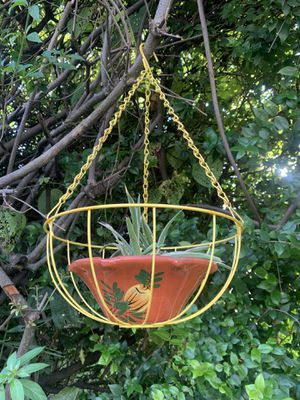 Hanging Plant on Terra-cotta Pot for Sale in Miami, FL